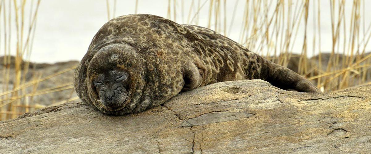 Seal safari - Experience Saimaa wildlife - Oravi, Finland